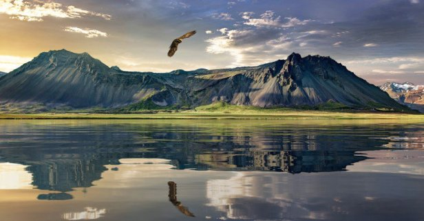 noua zeelanda - in tara norului alb - lark
