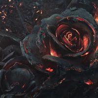 Trandafirii de mai - { recenzie }